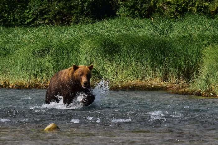 Katmai National Park And Reserve