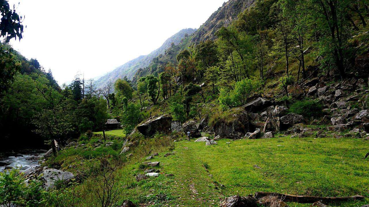 green jungles of the great himalayan national park