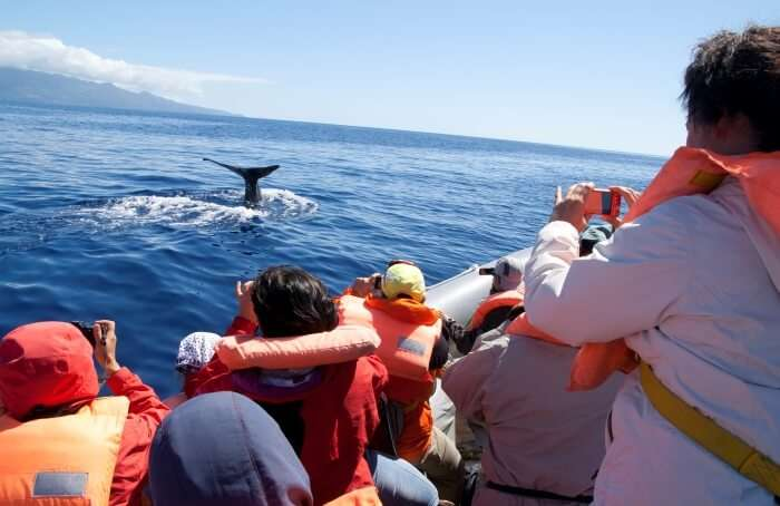 Luxury Whale Watching Cruise