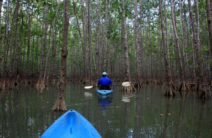 Mangrove kayaking at Mayabunder