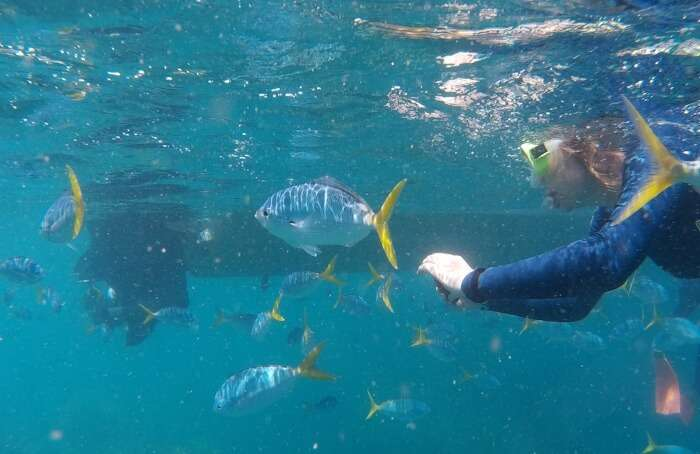 Manly-Snorkeling-Tour-And-Nature-Walk