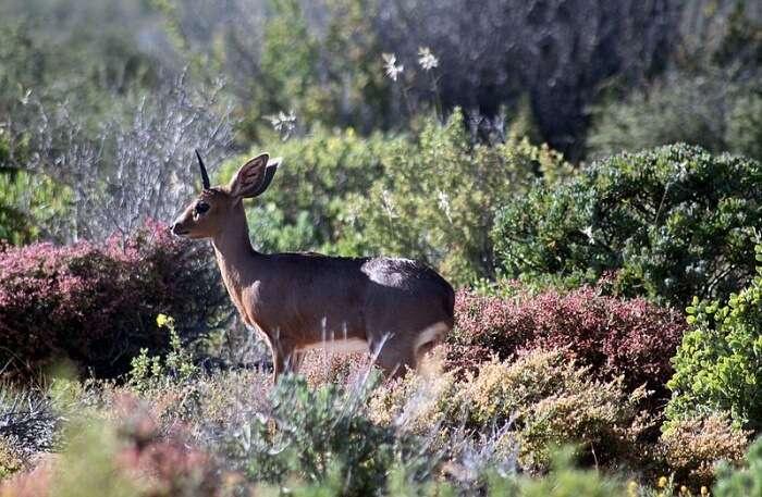 View of Namaqua National Park