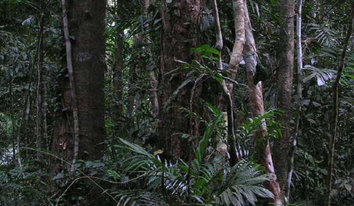 Night-tour-the-Daintree-Rainforest