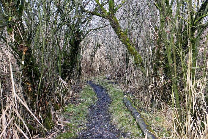 Okura Bush Walk