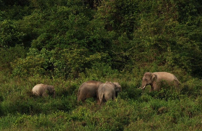 Elephants Group View