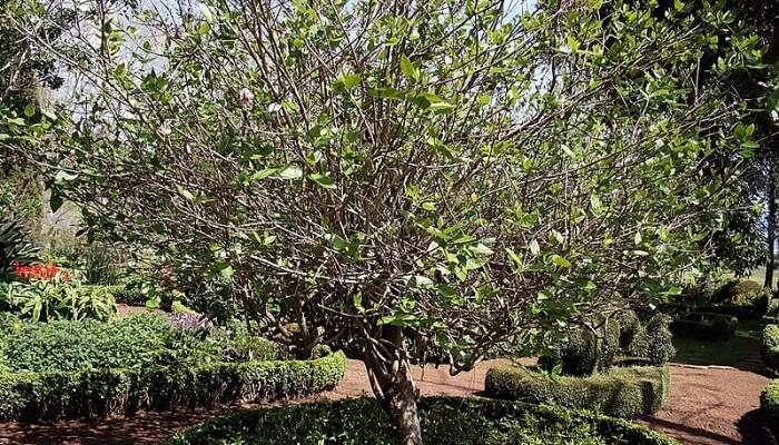 Palheiro Gardens