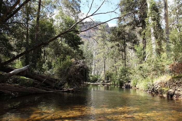 Pierces Pass to Blue Gum Forest