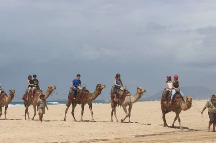 Port Macquarie Camel Safari