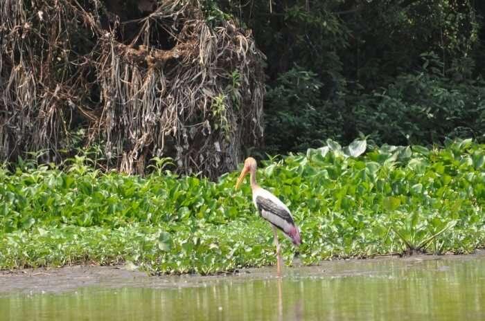 Prek Toal and Bird Sanctuary