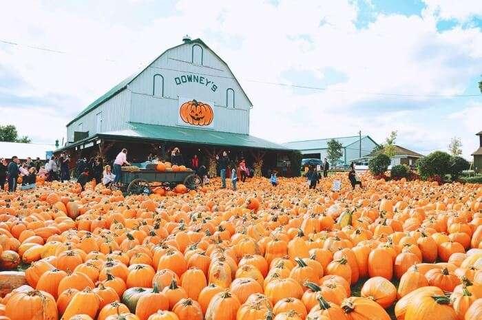 Pumpkin Fest at Downey's Farm Market, Ontario