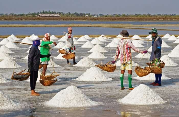 Salt farming view