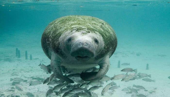 Seal Snorkeling View