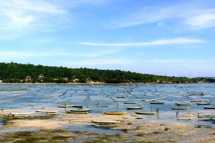 Seaweed Farming Of Nusa Lembongan