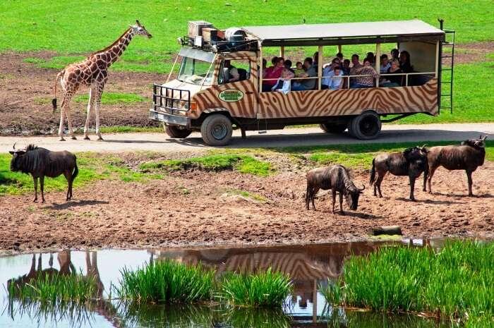 Serengeti Park, Hodenhagen