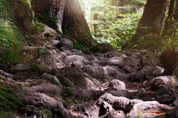 Sherbrooke Falls Trail