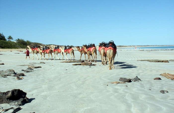 Sunset-Camel-Rides