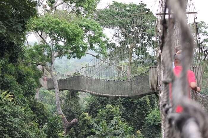 Take Part In The Kakum Canopy Walk