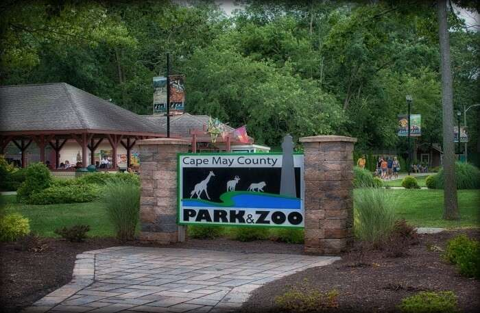 Take Your Kids To The Zoo