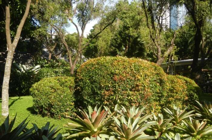 Take a blissful stroll in the parks of Makati