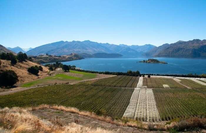 Taste special at Pearl Mountain Wines