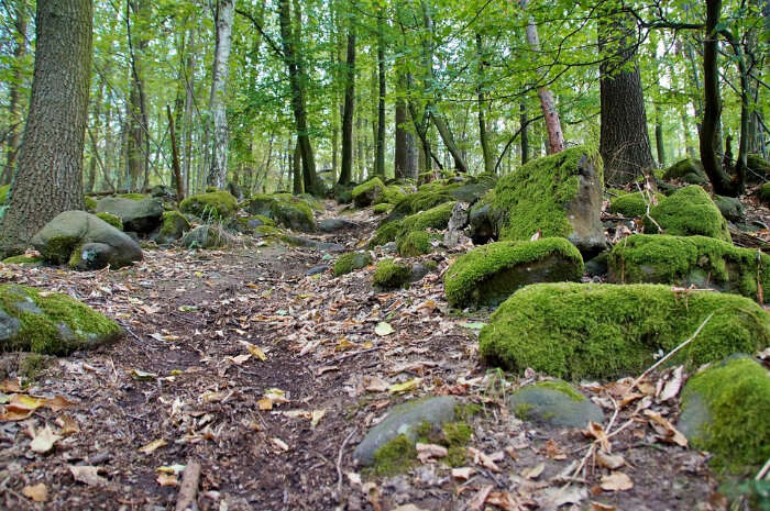 The Beeches Trail