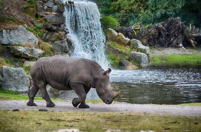 Visit Safari Niagara
