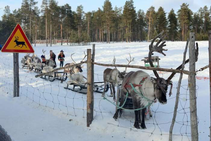 Visit the reindeers at a Reindeer Farm