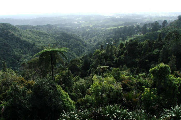 Waitakere Eco-Tourism