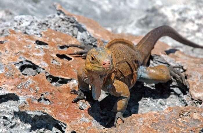 Lizard view