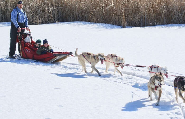 Winter Dog Mushing