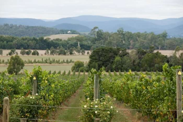 Yarra Valley Wine And Wildlife