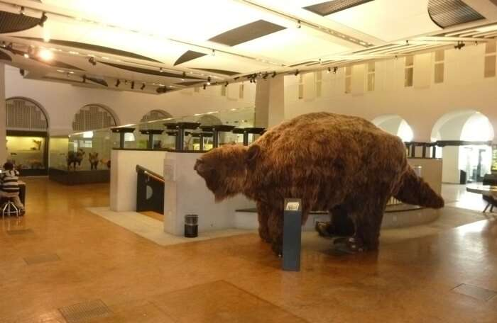 Zoological Museum, University Of Zurich