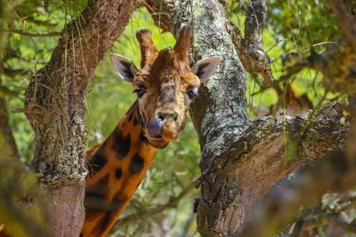 safaris in portugal