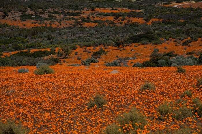 About Namaqua National Park