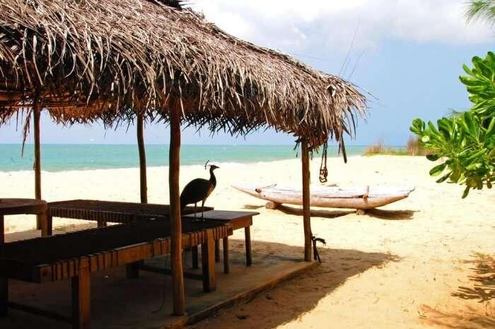 Alankuda Beach
