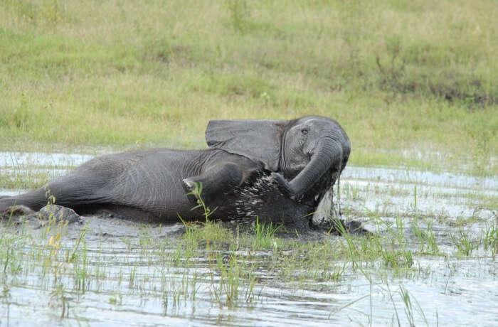 Bathing baby elephants at Theppakadu Elephant Camp