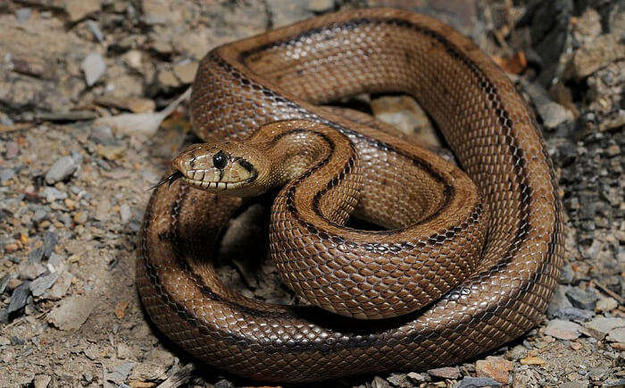 Bio Ken Snake Park