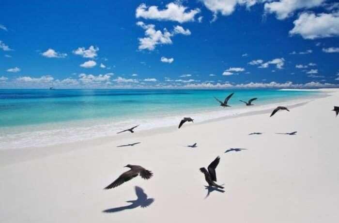 Bird Island - Aldabra Atoll