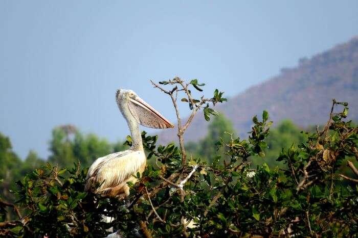 Bird and Animal watching