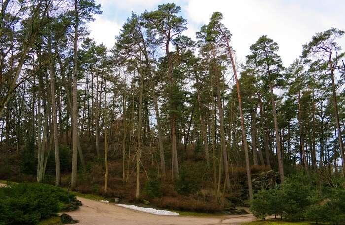 Birute Park