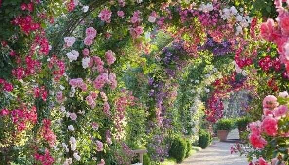 Blossom Park In Munnar