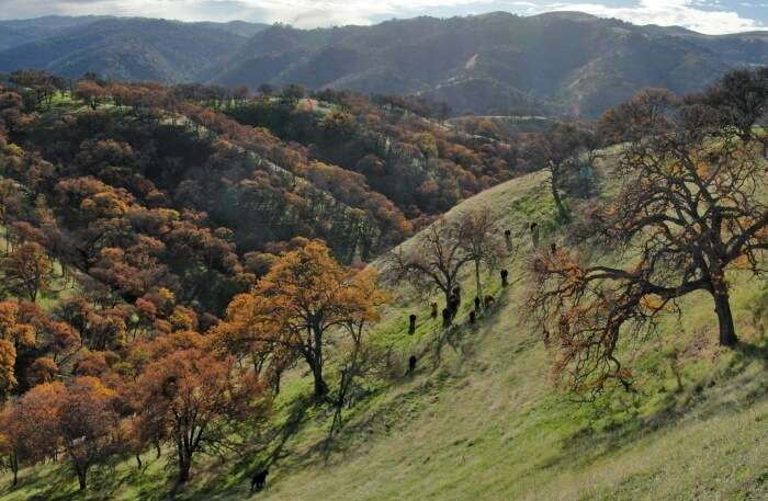 Claremont Canyon Regional Preserve view