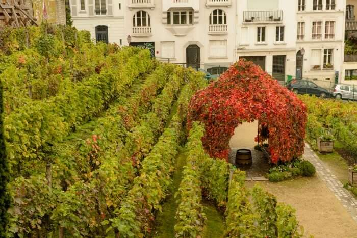 Clos Montmartre In Paris