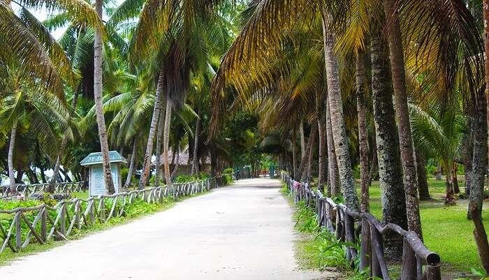 Coconut Plantation House