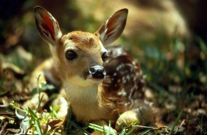 Deer view