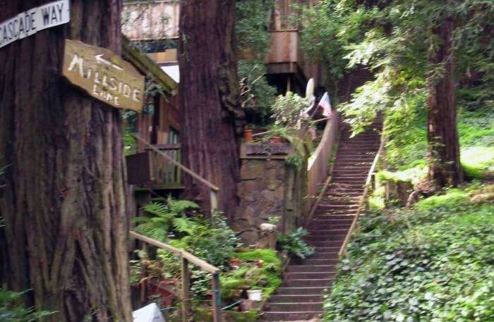 Dipsea Trail in San Francisco
