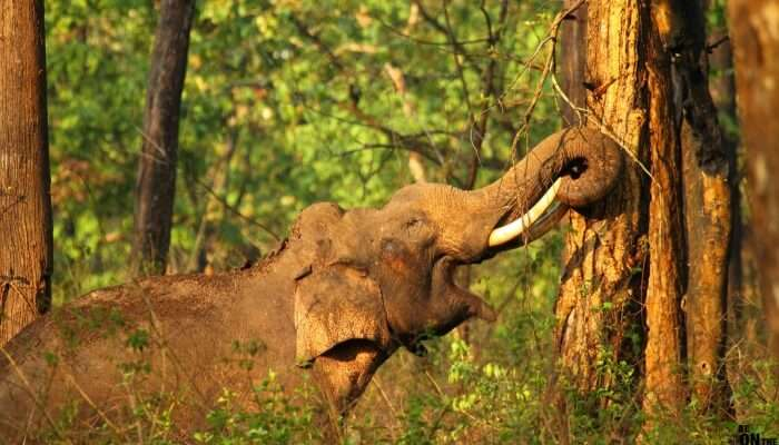 Elephant in jungles of kabini