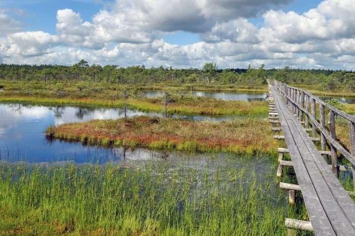 Endla Nature Reserve