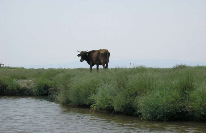 Evros-Delta-and-Dadia-Forest
