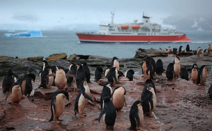 Go On A Ferry To Penguin Island Tour